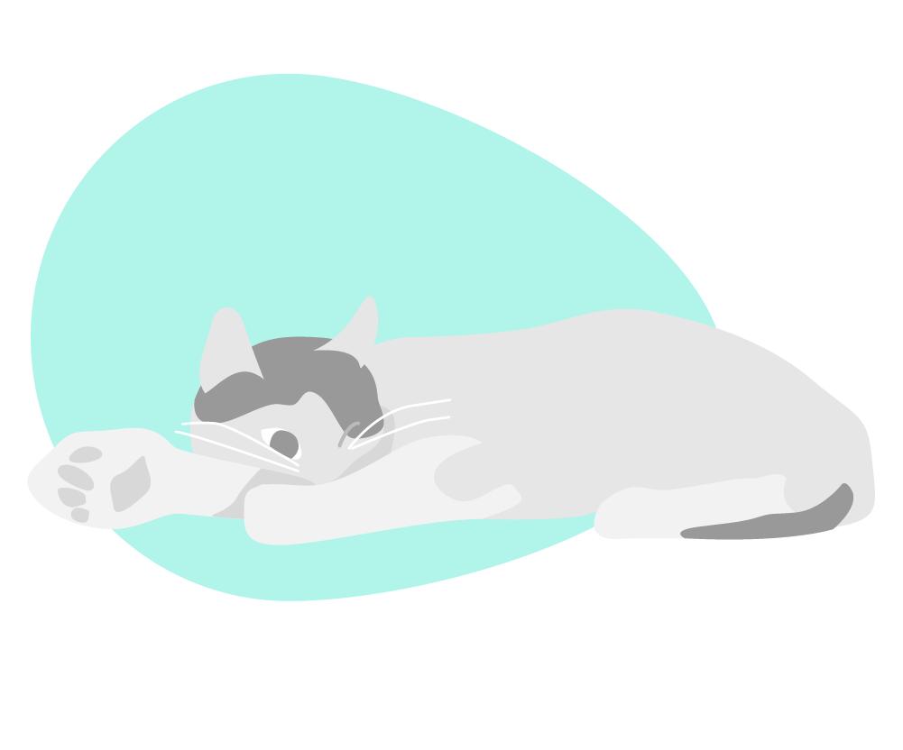Kuki Design Illustration Katze